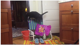 Cat gets literal jump start on Summer - Video
