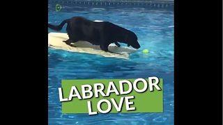 This Compilation Of Labradors Will Renew Your Love For This Amazing Breed - Video