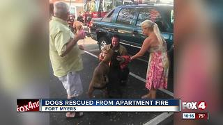 Dogs rescued from south Fort Myers apartment complex - Video