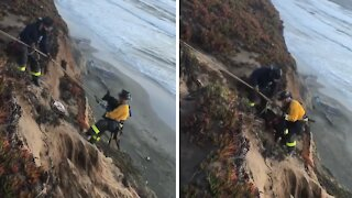 Labrador Rescued From Cliff Edge in San Francisco
