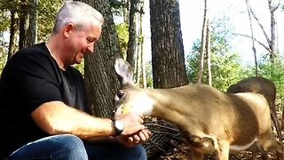 Wild deer go crazy for apples - Video