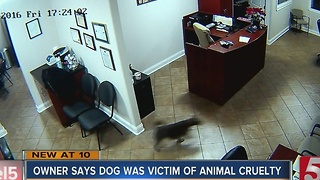 Owner Believes Dog Was Victim Of Animal Cruelty, Wants Justice