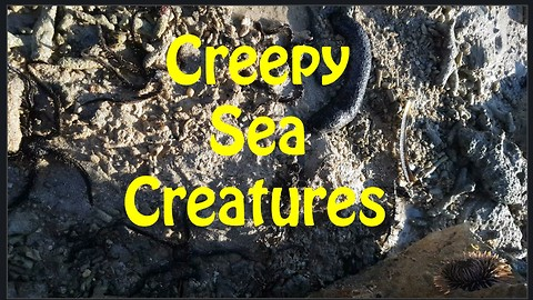 A Dozen of Creepy Sea Creatures Hiding under a Stone