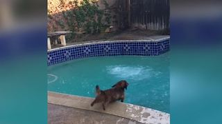 Dog Has Mixed Feelings About Swimming Pools - Video