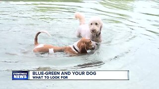 Blue-Green Algae: What to look for