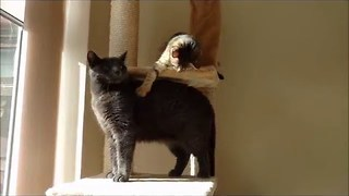 Try Separating These Cute Cat Chums, Tika and Paf - Video