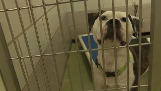 County animal shelter to reopen on Saturday - Video