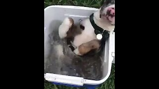 Puppy decides to literally chill out in cooler