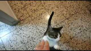 Affectionate Cat Welcomes Owner Home After Vacation - Video