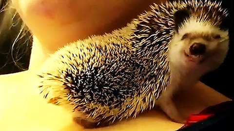Hedgehog flashes adorable smile during snuggle time