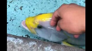 Friendly fish enjoys being caressed