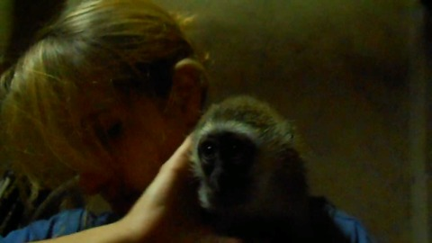 Orphaned baby monkey doesn't want caretaker to leave