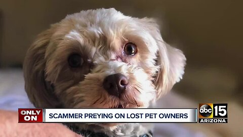 Scammer targeting Valley families on social media page who have lost pets