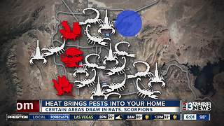 Heat draws pests into homes - Video