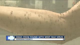 Two cases of West Nile reported in Wisconsin - Video
