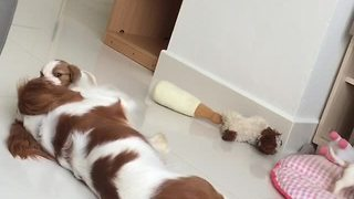 Dog preciously plays with her puppies