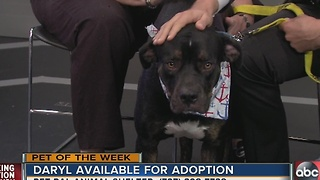 Pet of the week: 3-year-old Daryl is a Rottweiler mix that wants to play fetch with you - Video
