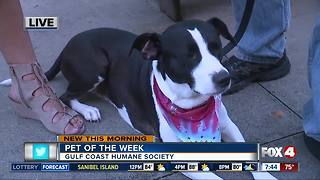 Pet of the week: Mitzy - Video
