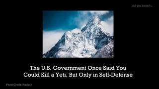 The U.S. Government Once Said You Could Kill A Yeti - Video