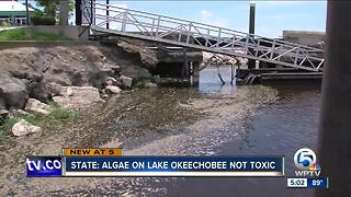 State: Algae on Lake Okeechobee is not toxic - Video