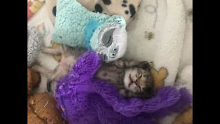 Adorable kittens snuggle up to cuddly toys