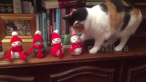 Taiga the cat is an absolute Scrooge