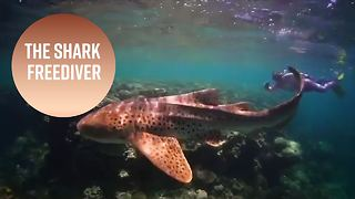 What this freediver's shark swims really mean