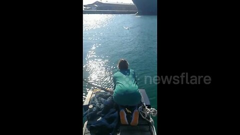 Injured penguin races across South African bay into rescuer's arms