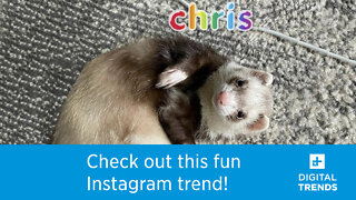 This latest Instagram trend may just help you with your identity crisis.