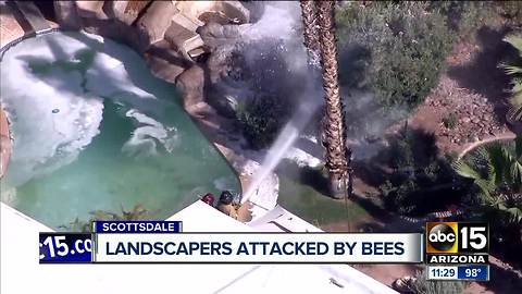 Landscapers attacked by bees in Scottsdale