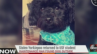 Stolen Yorkiepoo returned to USF student - Video