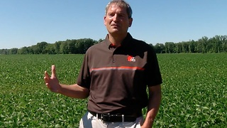 Ohio farmers wait to see impact of China soybean tariffs - Video