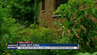 Taking action for Detroit family with overgrown weeds - Video
