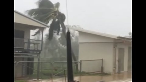 Queensland Palm Tree Is No Match for Cyclone Trevor