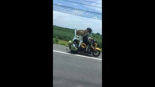 Motorcyclist cruises down busy road with two pet huskies - Video