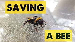 Dying bee rescued by compassionate human - Video