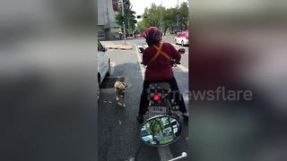 Dog Jumps Onto Back Of Motorbike To Ride Pillion - Video