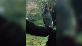 Penguins Play Games with Human - Video