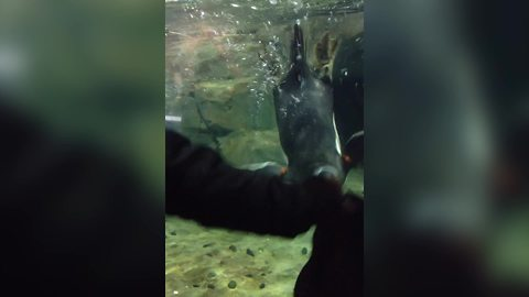 Penguins Play Games with Human