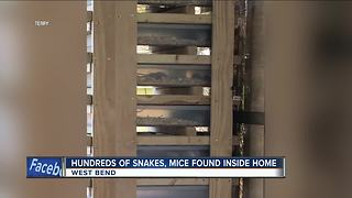 Hundreds of mice, snakes removed from West Bend home - Video
