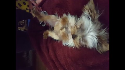 Dog goes CRAZY for Tummy Tickles
