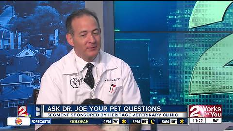 Dr. Joe answers your pet questions