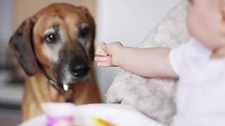 These Are The Twenty Most Popular Dog Names In 2017 - Video