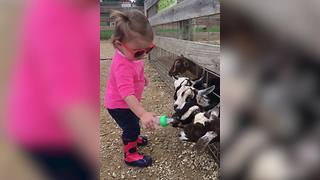 """Tot Girl Shares Her Bottle of Milk with Baby Goats"""