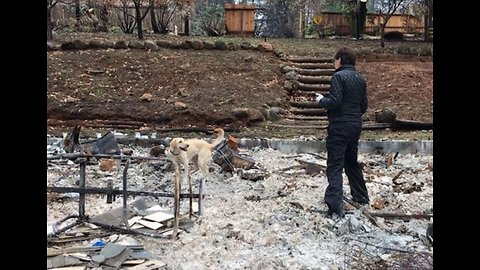 Canine Team Searches for Urns in Fire-Ravaged Town of Paradise