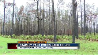 Starkey Park comes back to life - Video