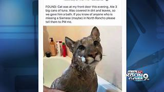 Viral social media post showing mountain lion in bathtub a hoax - Video