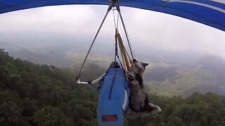 Daredevil Dog Takes To The Skies By Hang-gliding With Owner