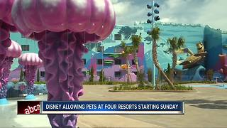 Select Walt Disney World Hotels Welcomes Guests and Their Dogs Starting Oct. 15