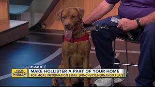 July 1 Rescues in Action superstar, Hollister - Video